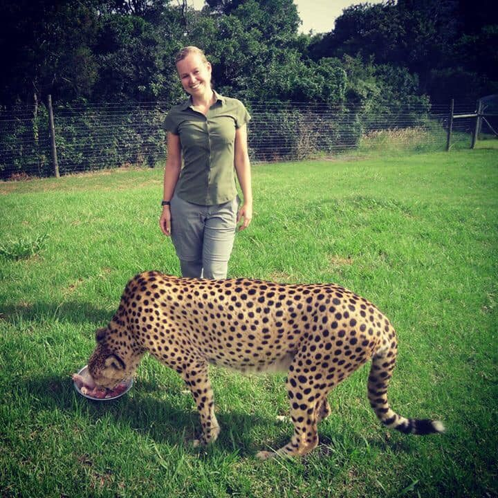 Susi Kaeufer volunteering at a Cheetah Reserve in SA
